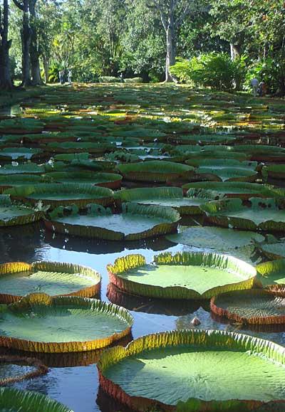jardin botanique de Pamplemousses